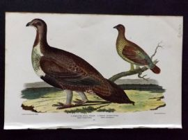 Alexander Wilson 1877 Bird Print. Cock Of The Plains,Female Spotted Grouse